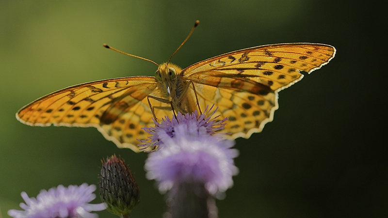 Leuchtender Schmetterling